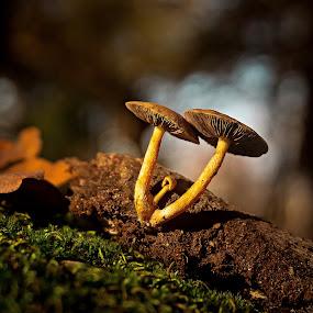 The cub. by Miguel Silva - Nature Up Close Mushrooms & Fungi ( moss, forest, leaf, viseu, fontelo, bokeh, cub, blanche, miguel silva, nature up close, couple, portugal, light, mushrooms )