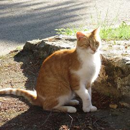 light and shadow by Vesna Martinjak - Animals - Cats Kittens ( shadow, light, cat, animal,  )