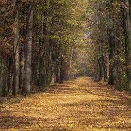 by Jasminka  Tomasevic - Landscapes Forests