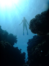 Photo: Paula and Rafal got all of these great underwater shots