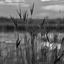 late summer morning by Jeff Sluder - Black & White Landscapes ( fernald, sunrise, grass )