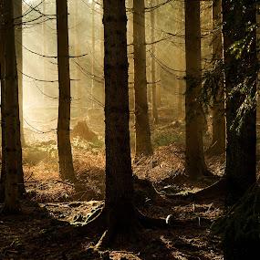 Tajemný les by Jana Černošková - Landscapes Forests ( forest,  )