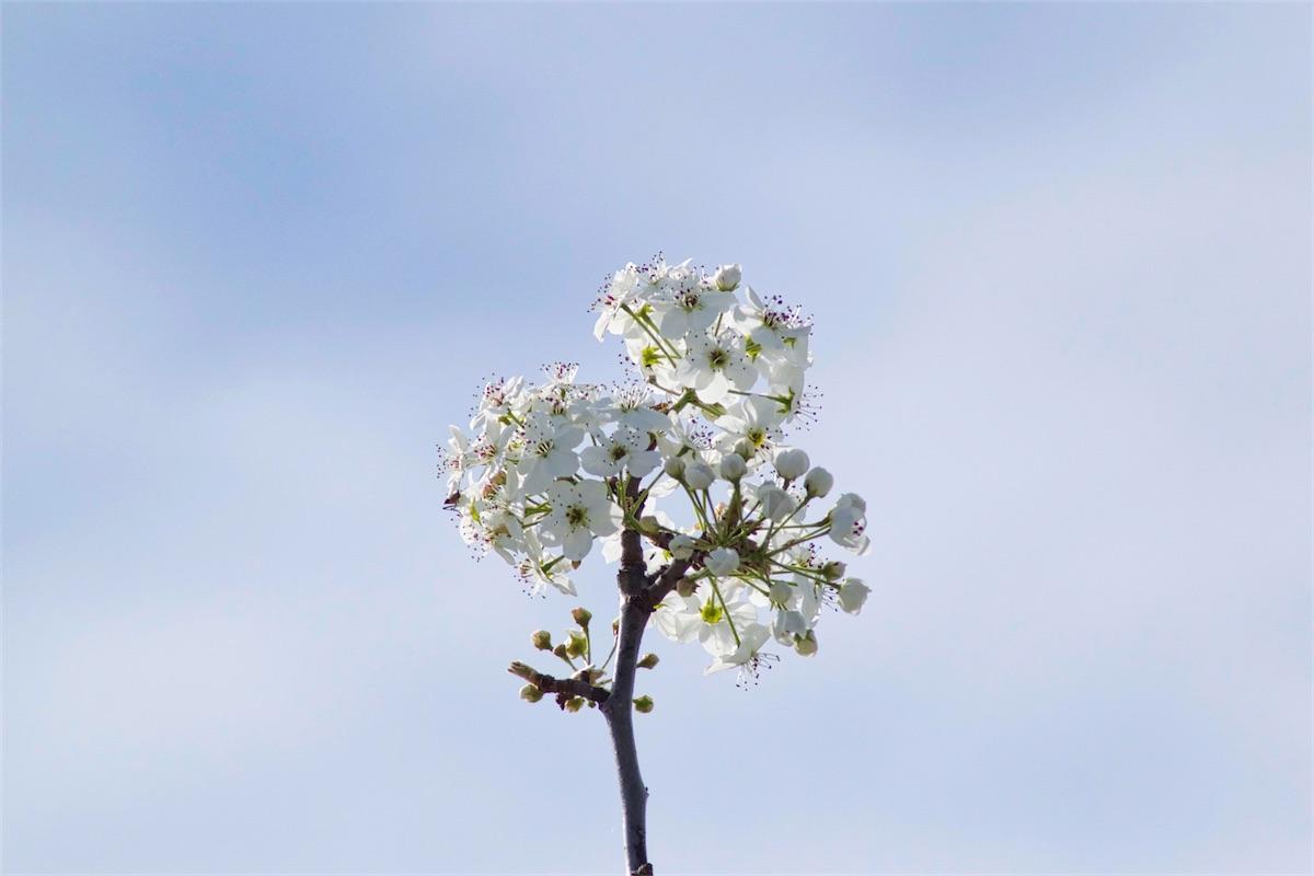 More Sky Blossom.jpg