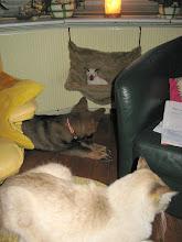 Photo: Makoto in de hangmat, Aiki eronder en Sinjo op de poef ervoor