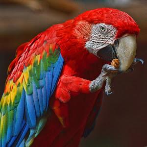 Macaw11091501.jpg