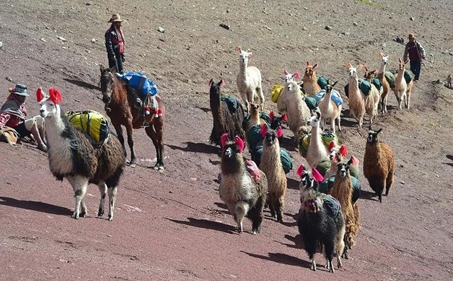 Beste Reisezeit Peru. Bild Lisa Wehmeyer