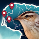 Birds' Routes APK