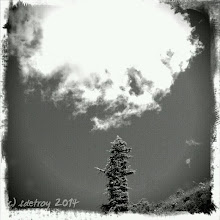 Photo: Oh so grateful for looking up, sky, tree.
