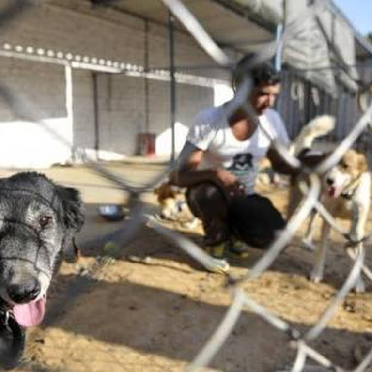 Opra Animal welfare organization - Animal Control Service in Coimbatore