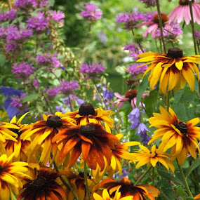 Minnesota wild flowers by Donna Wood - Novices Only Flowers & Plants (  )