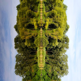 Tilted Perspective by Abhinav Ganorkar - Digital Art Things ( nature, waterscape, tree, nature close up, mirrored reflections, lake )
