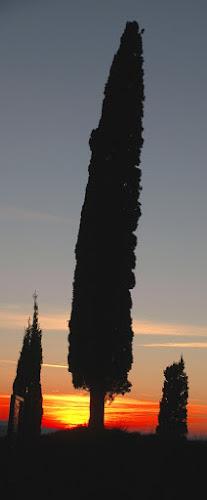 Essenza di Toscana di pie848