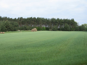 Photo: Pola i lasy, jak okiem sięgnąć.