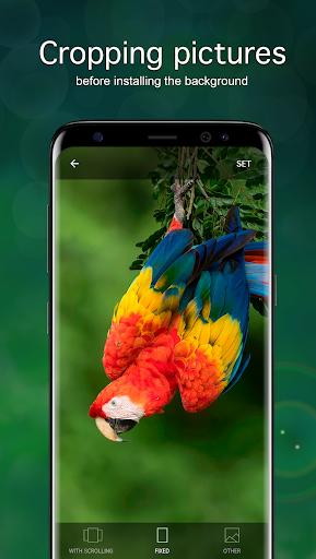 Parrot Wallpapers 4K modavailable screenshots 3