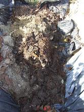 Photo: itt a gilisztás anyag van már a tetején.