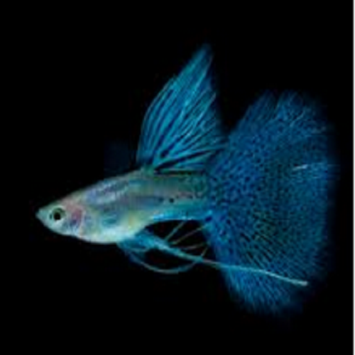 Guppy fish android apps on google play for Guppy fish care