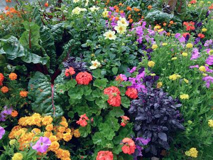 Jednoroczne Kwiaty Ogrodowe Twojogrodek Pl