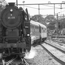 Steamtrain by Fok Vleeshakker - Black & White Landscapes ( stoom, steam train, hoorn, black and white, stoomtrein,  )