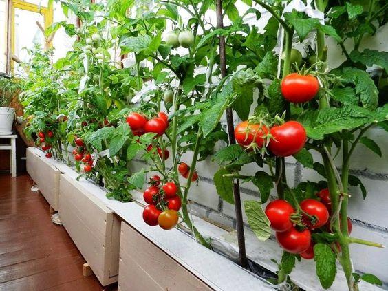 Городское фермерство — прихоть или панацея?