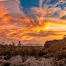 Desert Sunset by Richard Michael Lingo - Landscapes Sunsets & Sunrises ( arizona, saguaro, sunset, desert, landscape )
