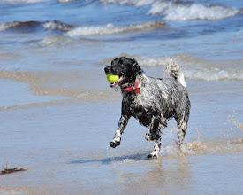 Photo: Dog on Beadnell beach