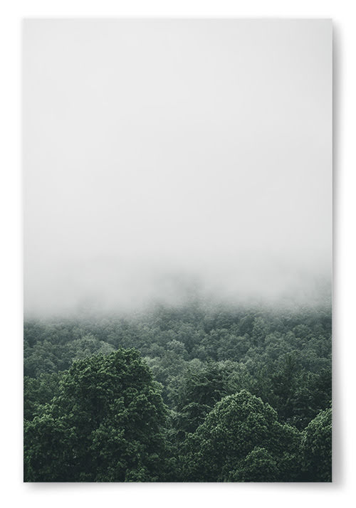 Poster Lövskog