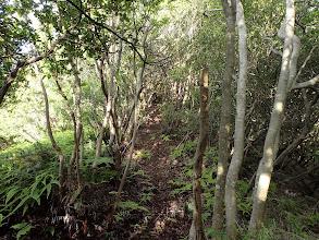 灌木の中の道