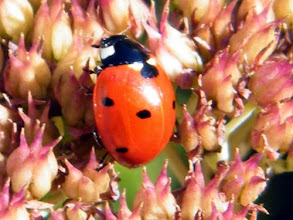 Photo: Bonjour,  14° et ciel clair.  Inutile de vous présenter l'ami du jardinier. Remplace les pesticides.