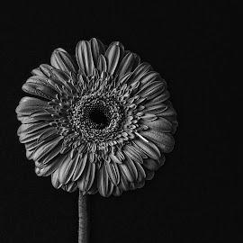 B&W flower 05 by Michael Moore - Black & White Flowers & Plants