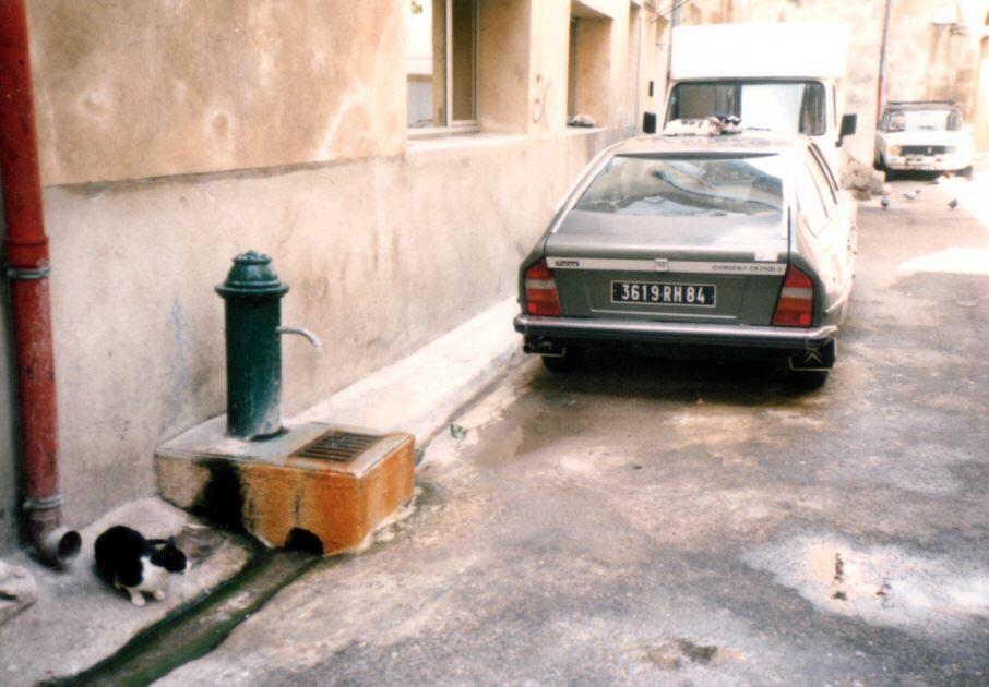 Photo: 86年7月南フランスのオランジュ。車の上にもいるんですよ