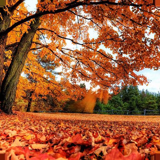 Romantic Autumn Wallpapers Aplikacije V Googlu Play