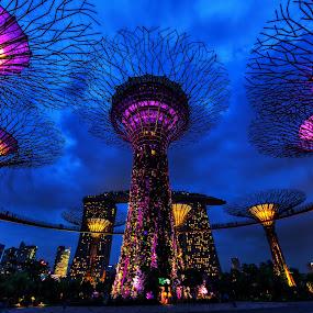Mystical Supertrees by Lye Danny - City,  Street & Park  City Parks