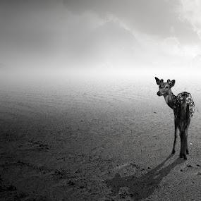 Lost by Muhammad Buchari - Digital Art Things ( . )