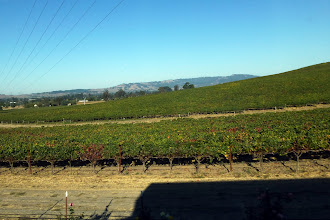 Photo: The drive to Sonoma was very scenic, with lots of Vineyards