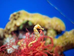 Photo: Sea horses!