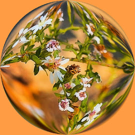 by Lena Arkell - Digital Art Abstract ( orange, ball, flowers, breen, circle )