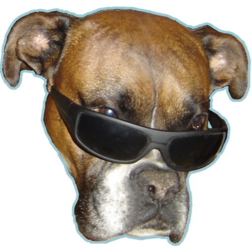 Dog vision