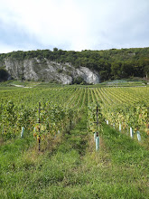 Photo: Vineyards everywhere in CH