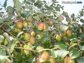 Photo: Bao Kul garden in Panchagarh