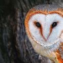Owl Puzzle icon