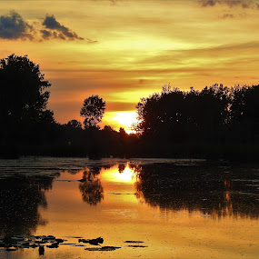 Golden Reflections by Kathy Woods Booth - Landscapes Sunsets & Sunrises ( reflection, reflections, golden hour, golden, tranquility, mirrored reflections )