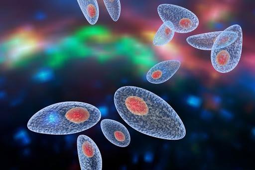 nhiem-toxoplasma-trong-thai-ky-nguy-hiem-nhu-the-nao