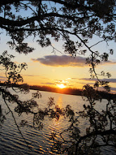 Photo: Pear blossoms framing a sunset over a lake at Eastwood park in Dayton, Ohio.