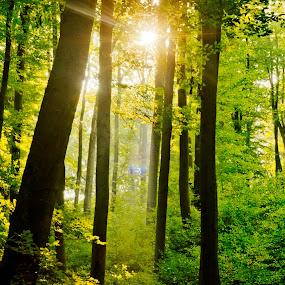 Wienerwald by Frederik Schulz - Landscapes Forests ( wien, vienna, autumn, forest, austria, österreich )