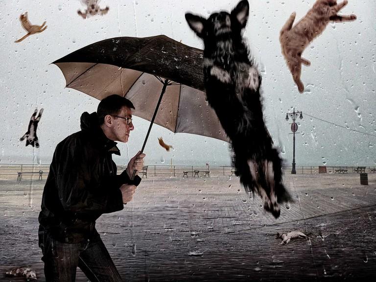 Raining cats and dogs!
