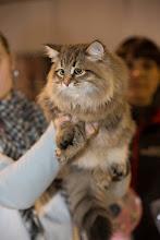 Photo: Малыш Премьерка.. мальчику 5 мес, 3400 веса -) В руках стюарда.. скоро вручат кубок моему котенышу Победителю -)