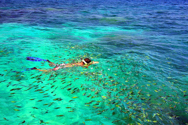 Snorkel with colourful fish in Phi Phi Leh Lagoon