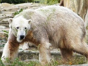 Photo: Knut wandert derweil ueber die Anlage ;-)