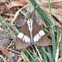 Tiger Moth (Day-flying Moth)