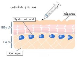 Sự sụt giảm HA khiến quá trình phục hồi tổn thương và tái tạo tế bào da chậm lại